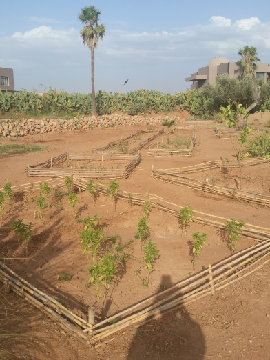 Part of what made Fellah so wondeful was it's eco-friendly and agricultural values. Local farmers grow herbs and vegetables in the vast farm land on the hotel grounds